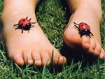Binderfüsse mit Marienkäfern