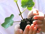 eine Pflanze in Händen